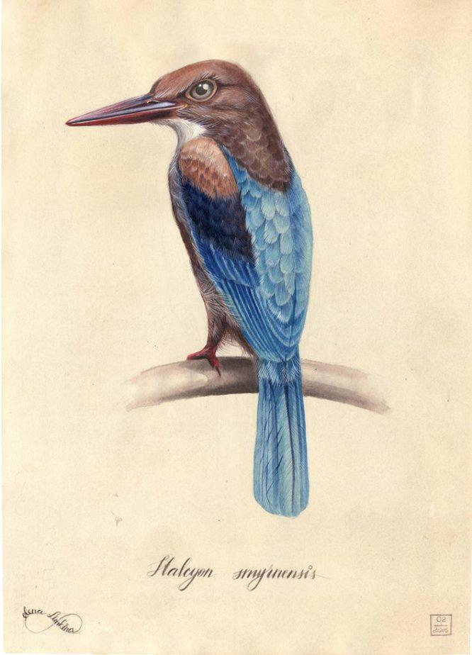 color-limkina-birds